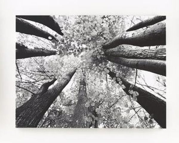 Picture of Ananya - Tree Wall Art